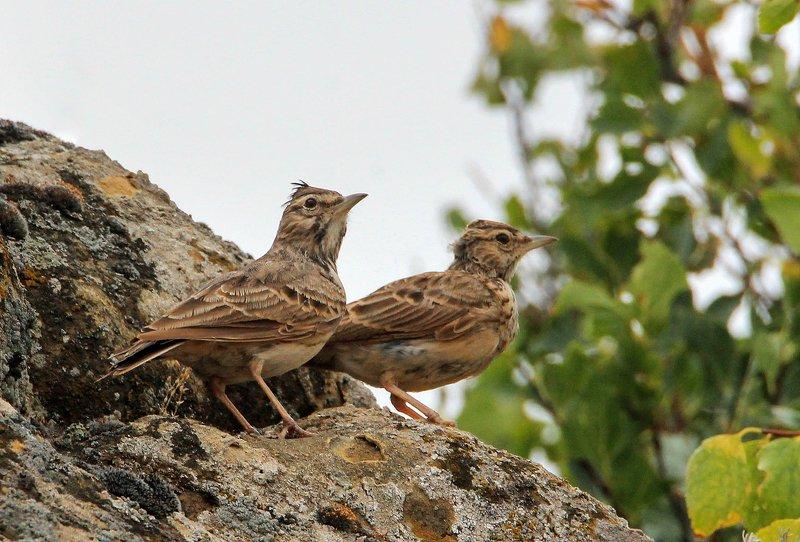 птицы,природа, горы. ***photo preview