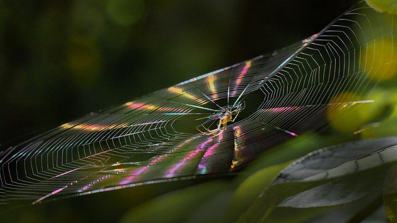 свет, луч, паук, паутина Брызги света фото превью
