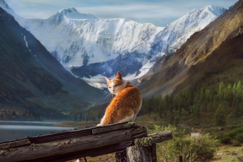 пейзаж, алтай, белуха,горы, кот, вершина Абориген.photo preview