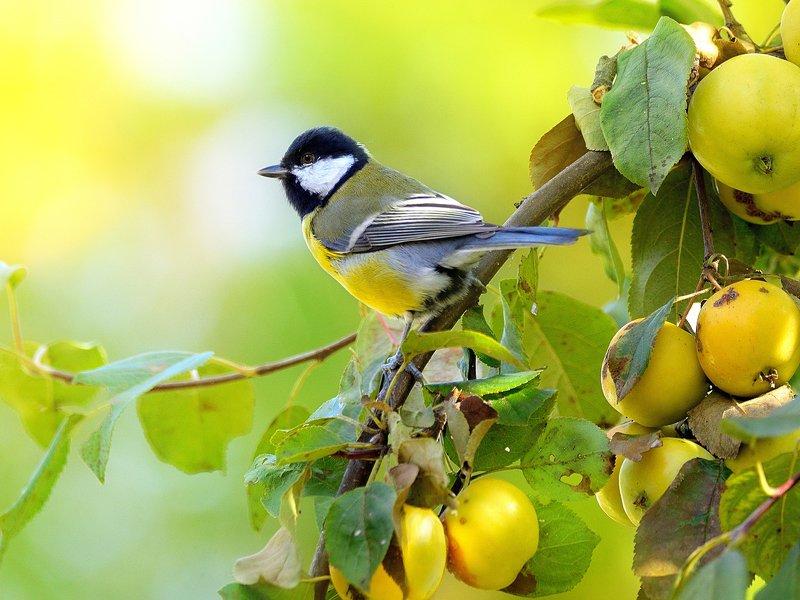 природа, фотоохота,  птицы, животные, осень Птицы нашего садаphoto preview