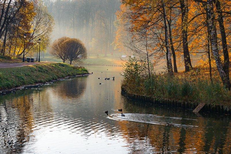 царицыно, парк, утро, пруд, деревья, утки, туман Утро в Царицыноphoto preview
