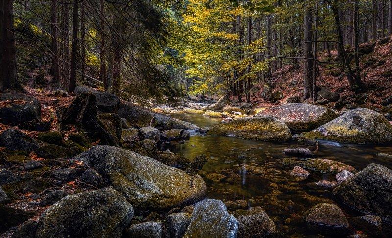 лето река вода водоём камни отражения лес деревья листва водопад пейзаж природа путешествия Лесная тишинаphoto preview