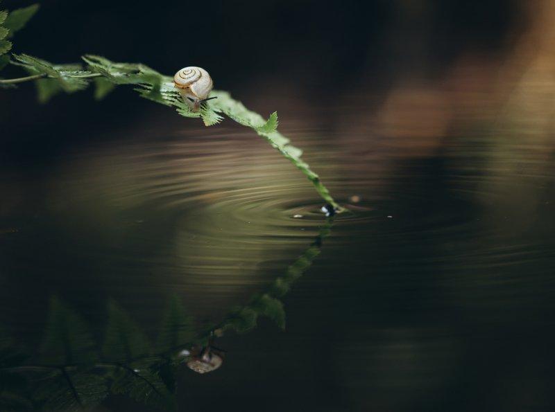 улитка, лес, папоротник, бокешки, свет, отражение Тёплая осень...photo preview