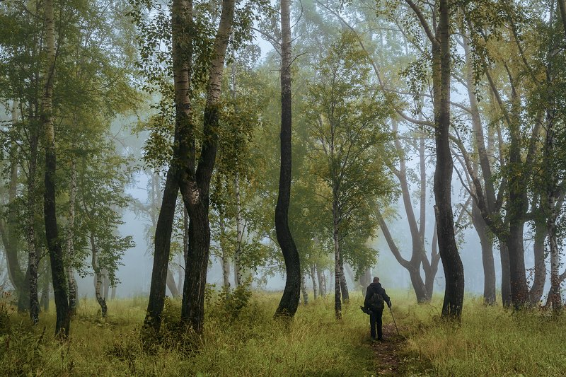 осень, сентябрь, лес, туман, утро, деревья, трава, человек, прохожий Недвижим утренний туманphoto preview