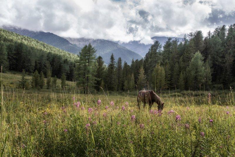 пейзаж, алтай, горы,лето,август, лошадь Горный Алтай.photo preview