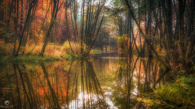autumn,forest,trees,nature,water,Ruda,landscape,morning,Nikon,sky,light,mirror, Forest mirror reflectionphoto preview