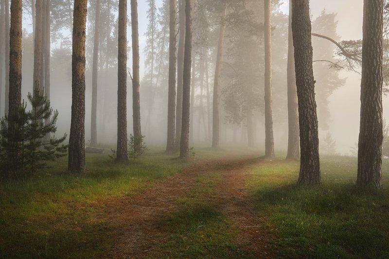 Утро в туманном лесу фото превью