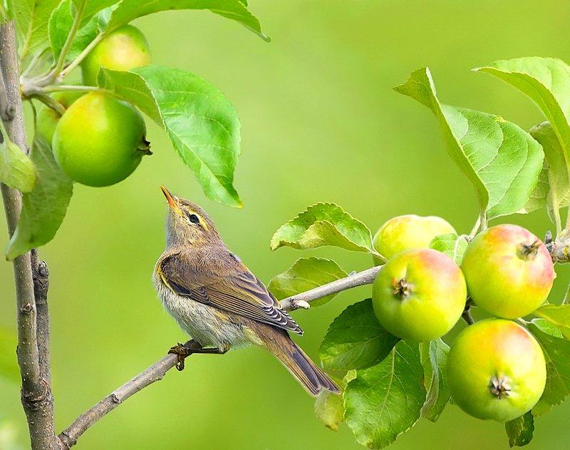 природа, фотоохота,  птицы, животные, осень Птицы нашего сада 2photo preview