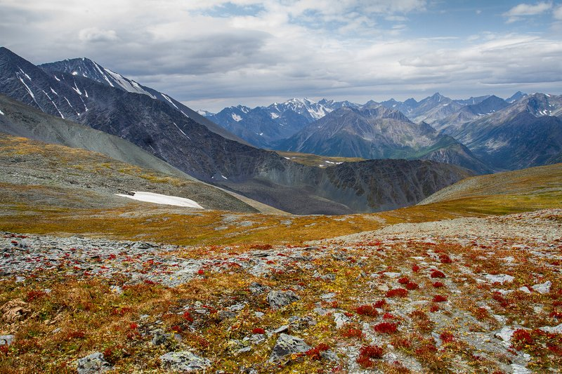 пейзаж, алтай, снег, горы,лето,август, цветение Каратюрекphoto preview