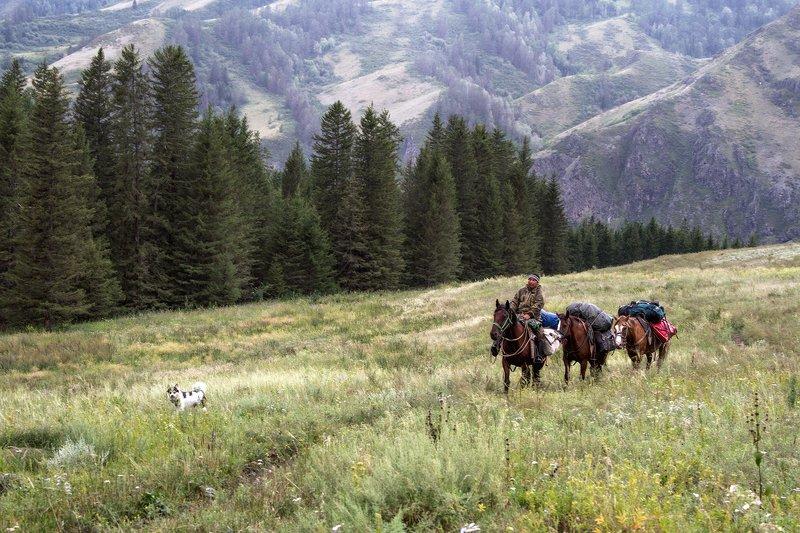 пейзаж, алтай,горы,лето,август, лошади photo preview