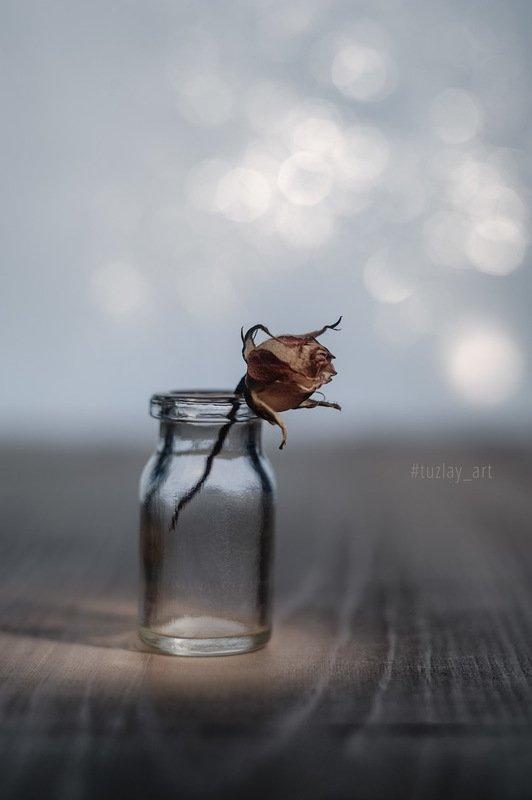 бутон розы, боке, гелиос 44, белый гелиос Про нераскрывшийся бутон фото превью