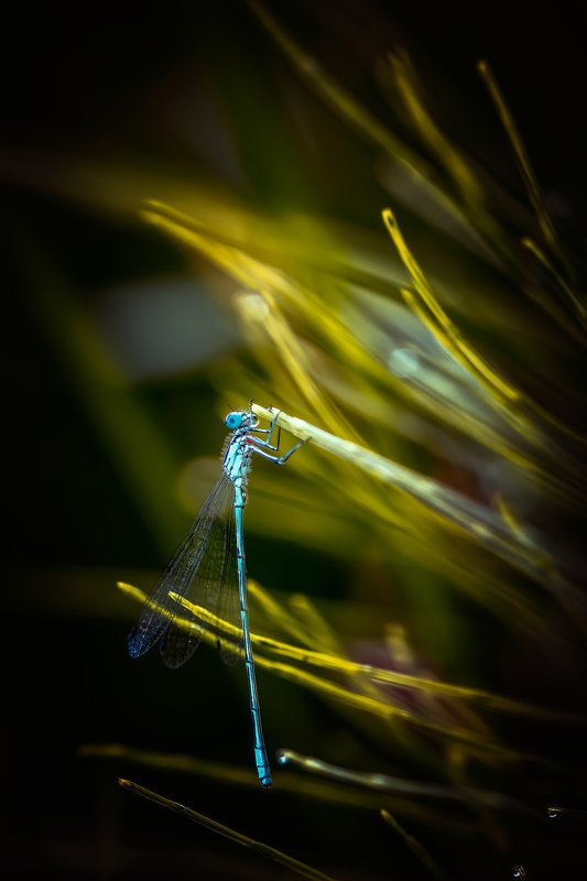 Dragonfly, nature, light, Nikon, dawn,  Dragonflyphoto preview