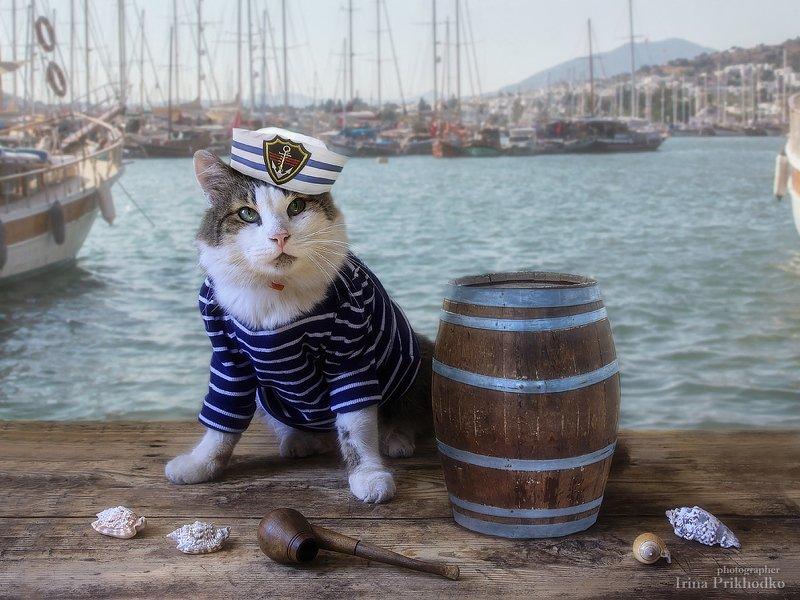 кот, море, морской костюм, постановочное фото, животные, питомцы Капитан Лёваphoto preview