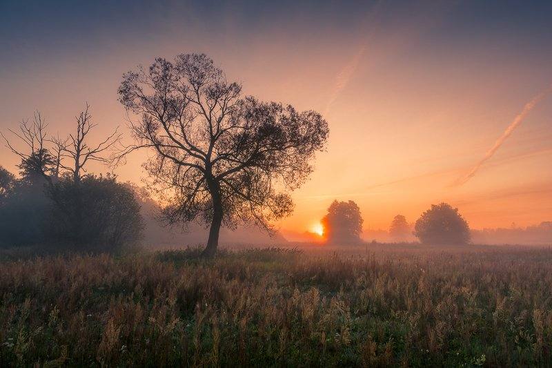 morning, sunrise, tree, meadow, foggy, Morningphoto preview