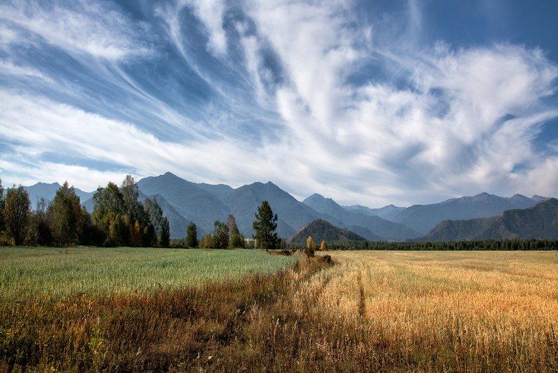 пейзаж, алтай,горы,август,поля Алтайphoto preview