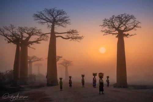 Аллея баобабов. Мадагаскар.