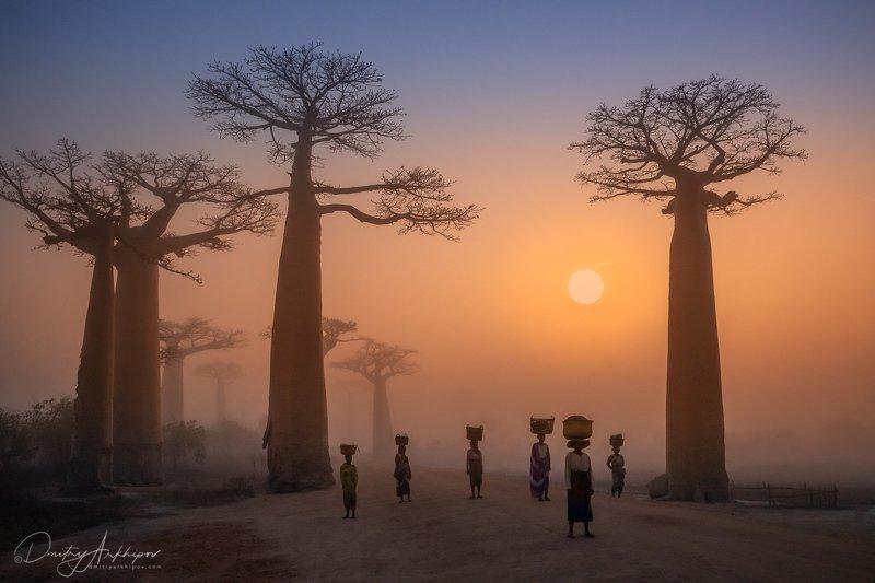 Аллея баобабов. Мадагаскар.photo preview