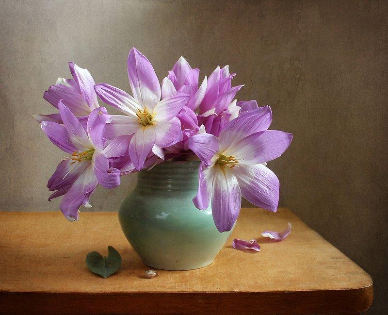 осень,  цветы, натюрморт, марина филатова, безвременник Нежность осени фото превью