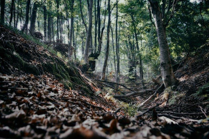 forest, landscape, trees, nature, autumn, лес, пейзаж, деревья, природа, осень Forest landscapephoto preview