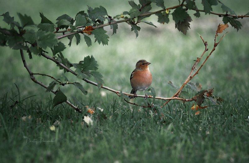 природа, лес, животные, птицы Первая осеньphoto preview