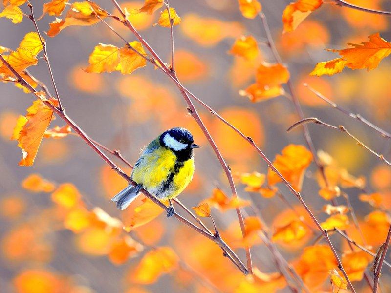 природа, фотоохота,  птицы, животные, осень Вот и наступила осеньphoto preview
