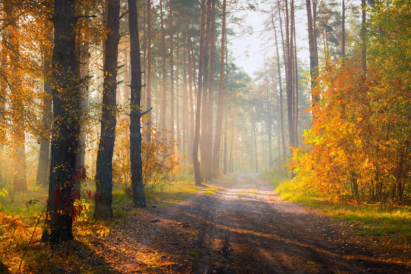 лес, осень, октябрь, утро, рассвет, туман А в наши души осень ворвалась...photo preview