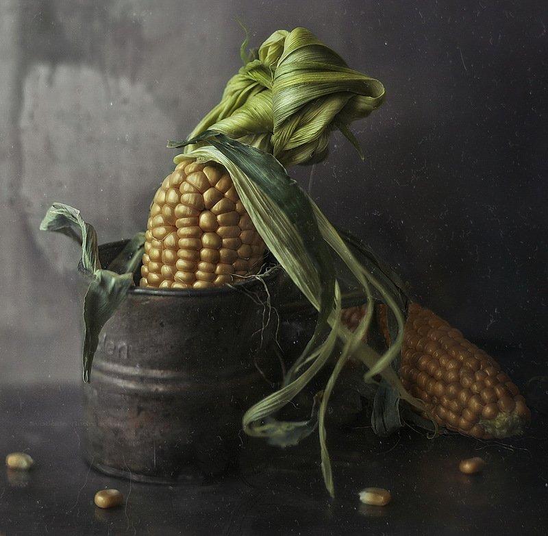 Corn* фото превью