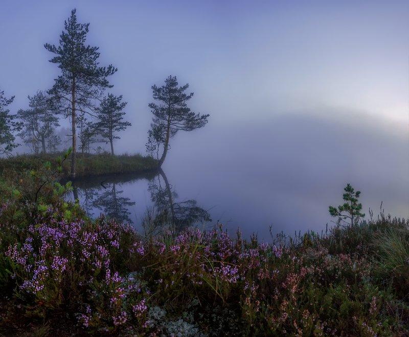 болото, кайф, рассвет ,север ,солнце, свет, закат, облака, отражение, фототур Утроphoto preview