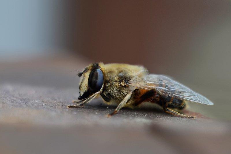Отдых пчелыphoto preview