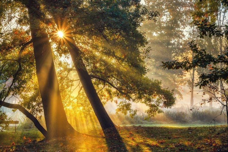 пейзажи Чехия туман утро лес осень листва рассвет лучи солнце парк деревья  природа путешествия Осенние зарисовкиphoto preview