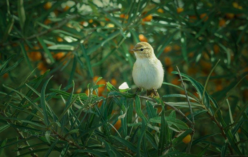природа, лес, животные, птицы Облепиховая сказкаphoto preview