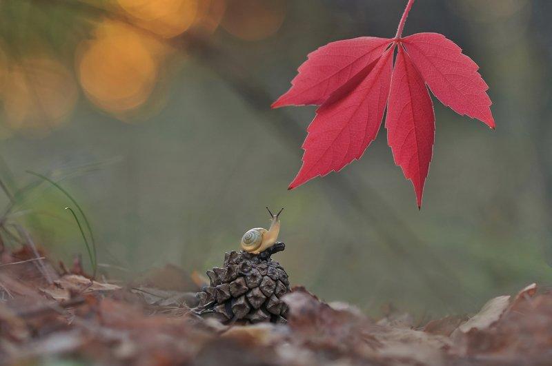 улитка, закат, осень Провожая осенний вечер фото превью