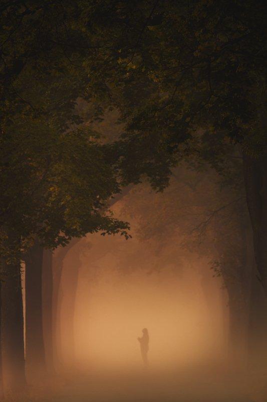 landscape,canon,mist,light,autumn Lost in Confusionphoto preview