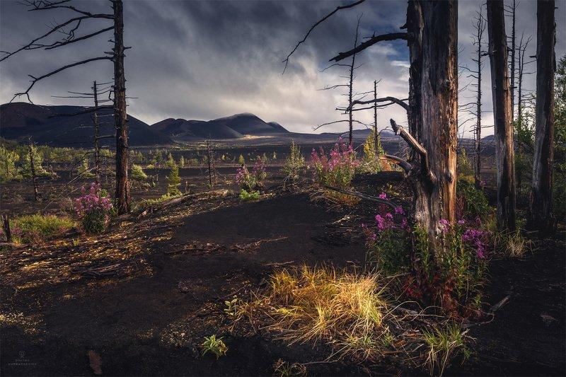 Краски мертвого лесаphoto preview