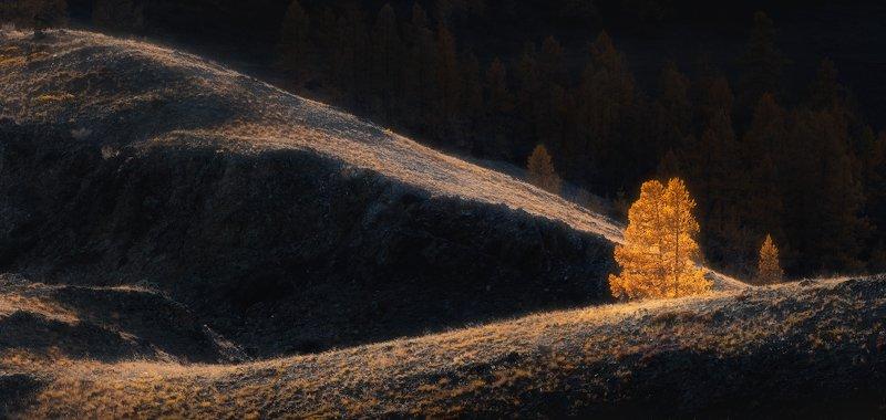 алтай,осень Алтайская свеча...photo preview