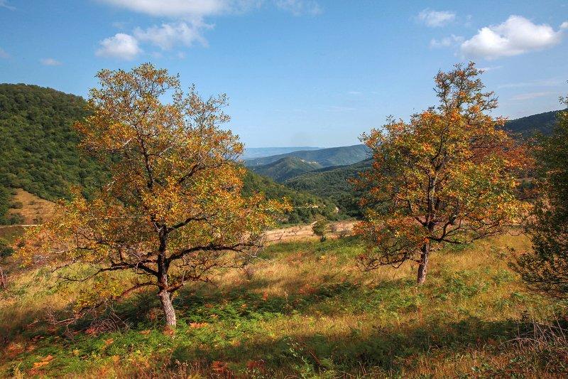 осень,пейзаж,горы,лес,природа,дагестан. Осень к нам приходит..photo preview