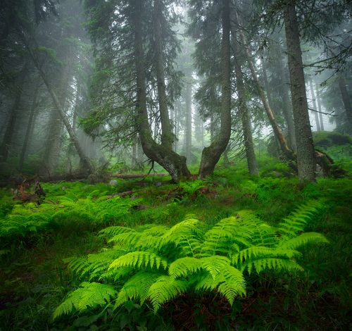 Forest stories continue