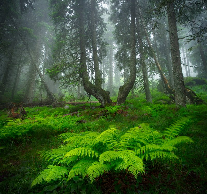 landscape nature scenery forest wood trees mist misty fog foggy mountain vitosha bulgaria туман лес Forest stories continuephoto preview