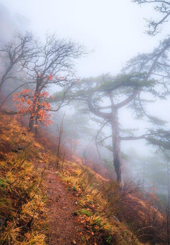 Уходящим в туман...photo preview
