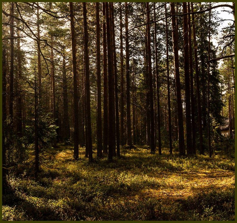Лесная прогулка с фотоаппаратом.photo preview