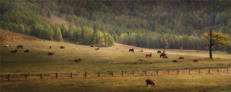 алтай, горный алтай, осень, краски, тепло, жёлтый, пейзаж, лошади Бархатная осень. Алтайphoto preview