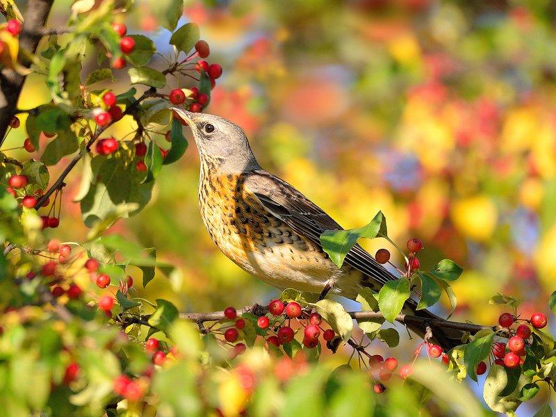 природа, фотоохота,  птицы, животные, осень Дачникphoto preview