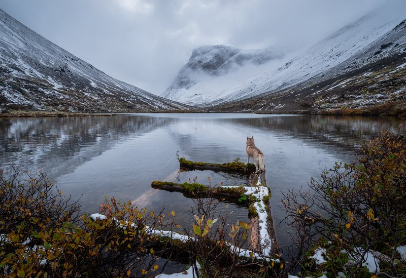 пейзаж,хаски,хибины,озеро,горы,первый снег,россия,кольский,туман,осень,pentax,отражение Хибиныphoto preview