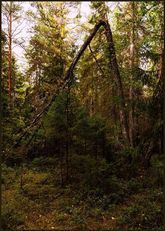 Геометрия лесаphoto preview