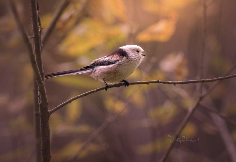 природа, лес, животные, птицы Осенняя трельphoto preview