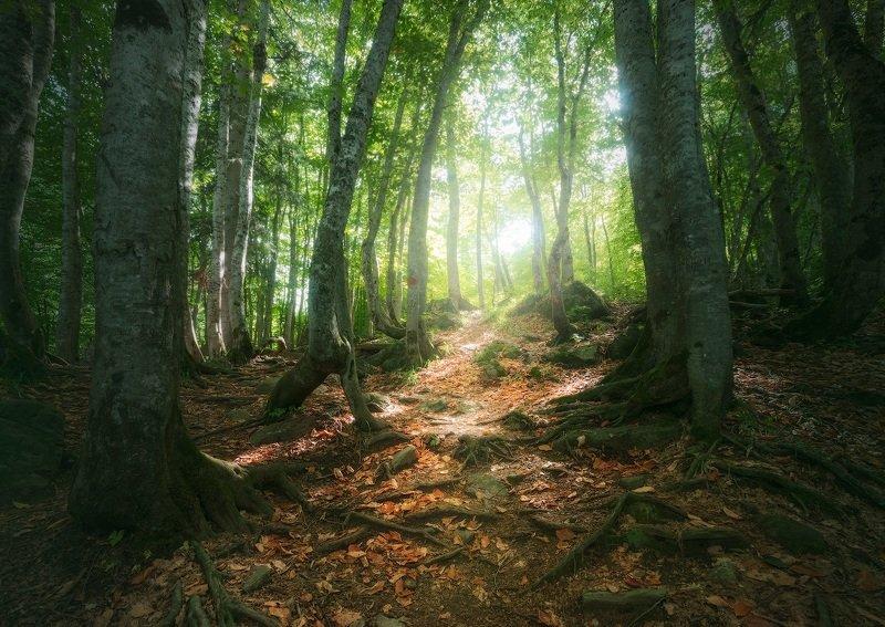 домбай, кавказ, лес В лесах Домбаяphoto preview