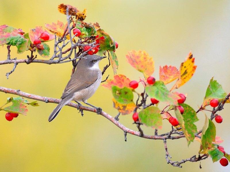 природа, фотоохота,  птицы, животные, осень Осенние зарисовкиphoto preview