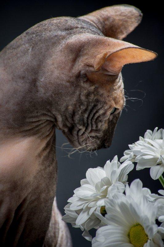 Ой... цветочки...photo preview