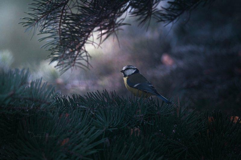 природа, лес, животные, птицы Утренняяphoto preview