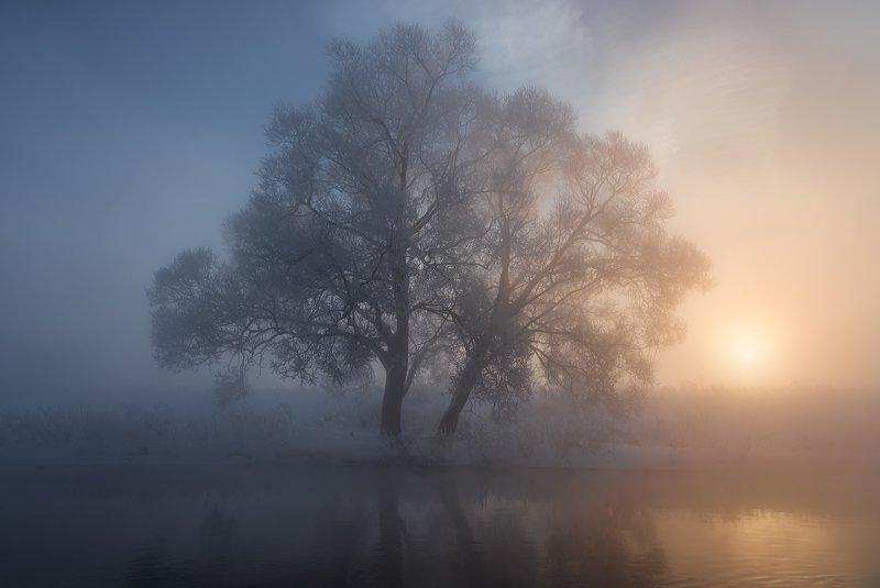 утро, рассвет, природа, туман, река, истра Противостояниеphoto preview